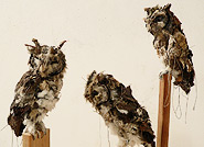 Kathryn Spence, Untitled (Western Screech Owls) (detail), 2009. Coats, pants, stuffed animals, sand, string, thread, wire, pins.